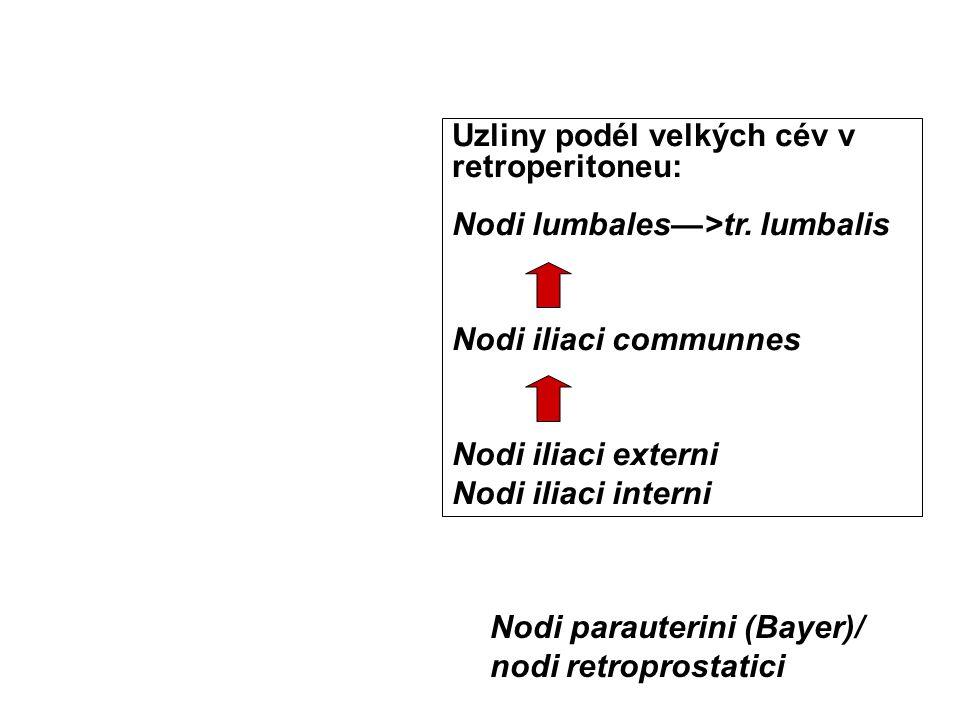 Uzliny podél velkých cév v retroperitoneu: