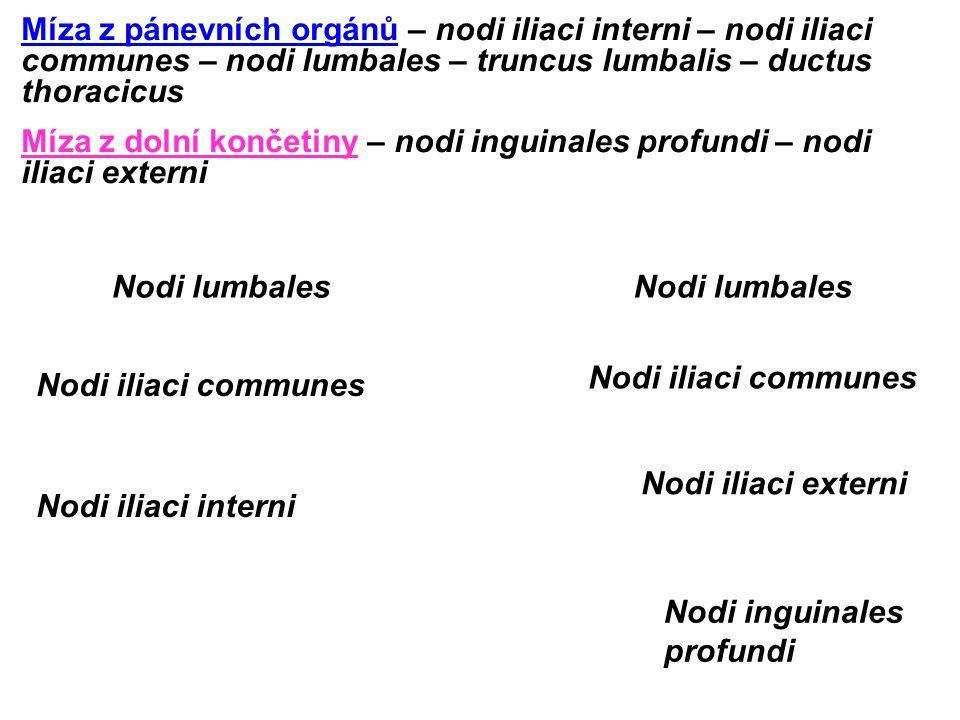 Míza z pánevních orgánů – nodi iliaci interni – nodi iliaci communes – nodi lumbales – truncus lumbalis – ductus thoracicus