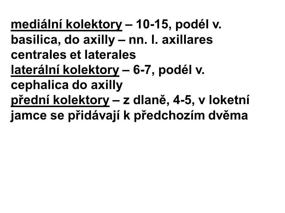 mediální kolektory – 10-15, podél v. basilica, do axilly – nn. l