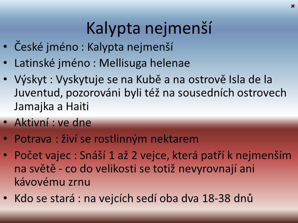 Kalypta nejmenší České jméno : Kalypta nejmenší