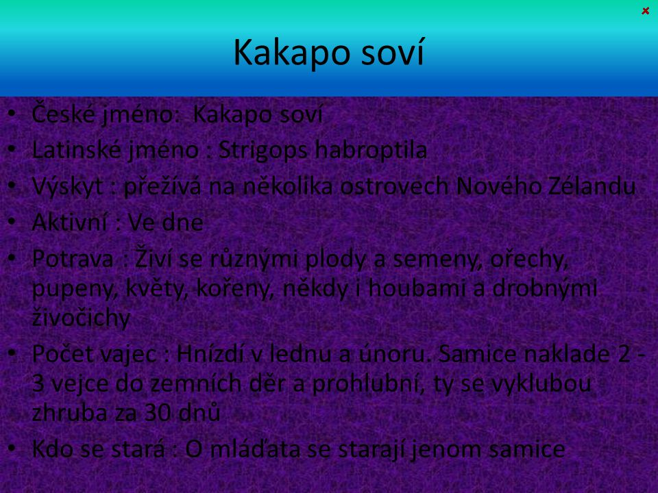 Kakapo soví České jméno: Kakapo soví