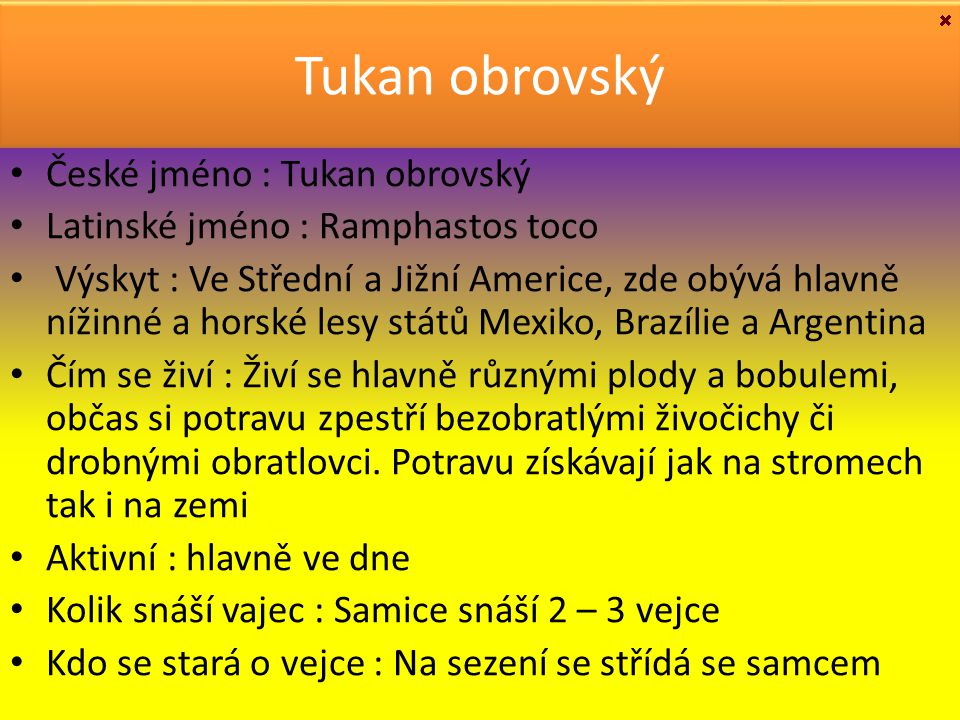 Tukan obrovský České jméno : Tukan obrovský