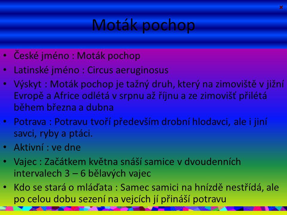 Moták pochop České jméno : Moták pochop