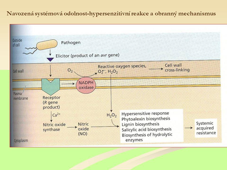 Navozená systémová odolnost-hypersenzitivní reakce a obranný mechanismus