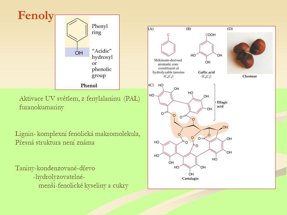 Fenoly Aktivace UV světlem, z fenylalaninu (PAL) furanokumariny