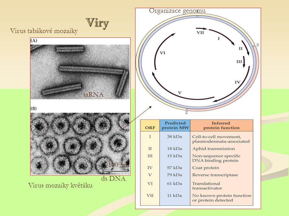 Viry Organizace genomu Virus tabákové mozaiky ssRNA 100 nm ds DNA