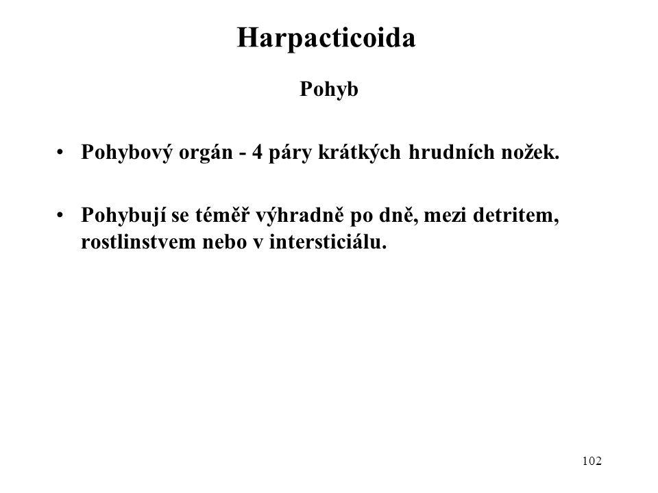 Harpacticoida Pohyb Pohybový orgán - 4 páry krátkých hrudních nožek.