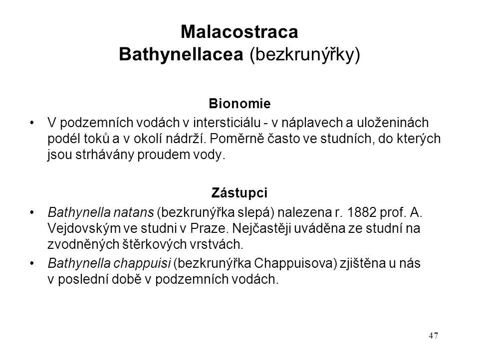 Bathynellacea (bezkrunýřky)
