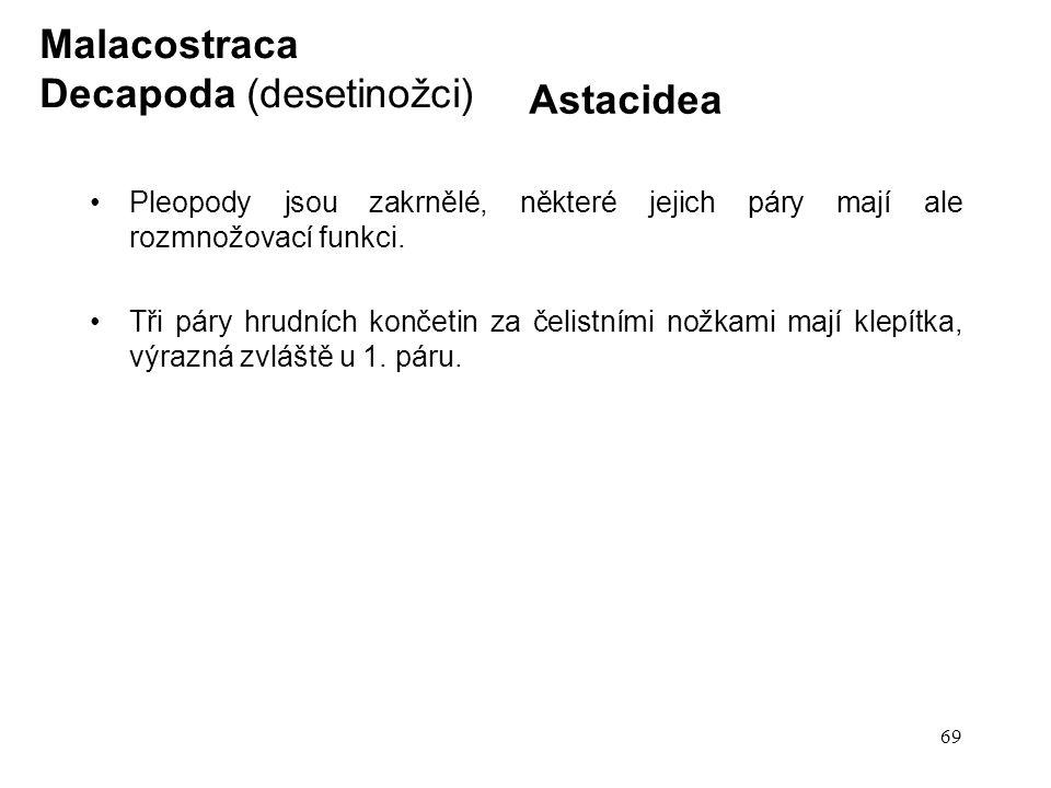 Decapoda (desetinožci) Astacidea