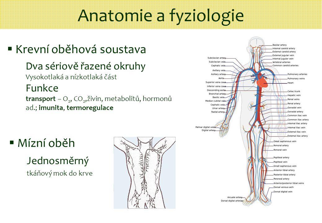 Anatomie a fyziologie Krevní oběhová soustava Mízní oběh