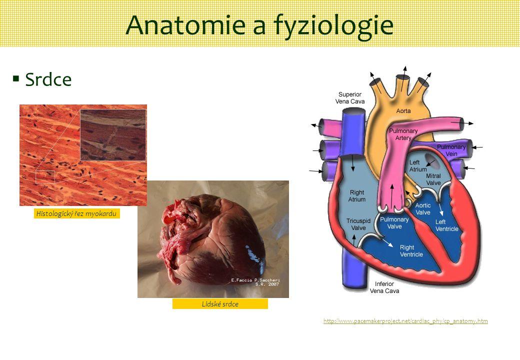 Histologický řez myokardu