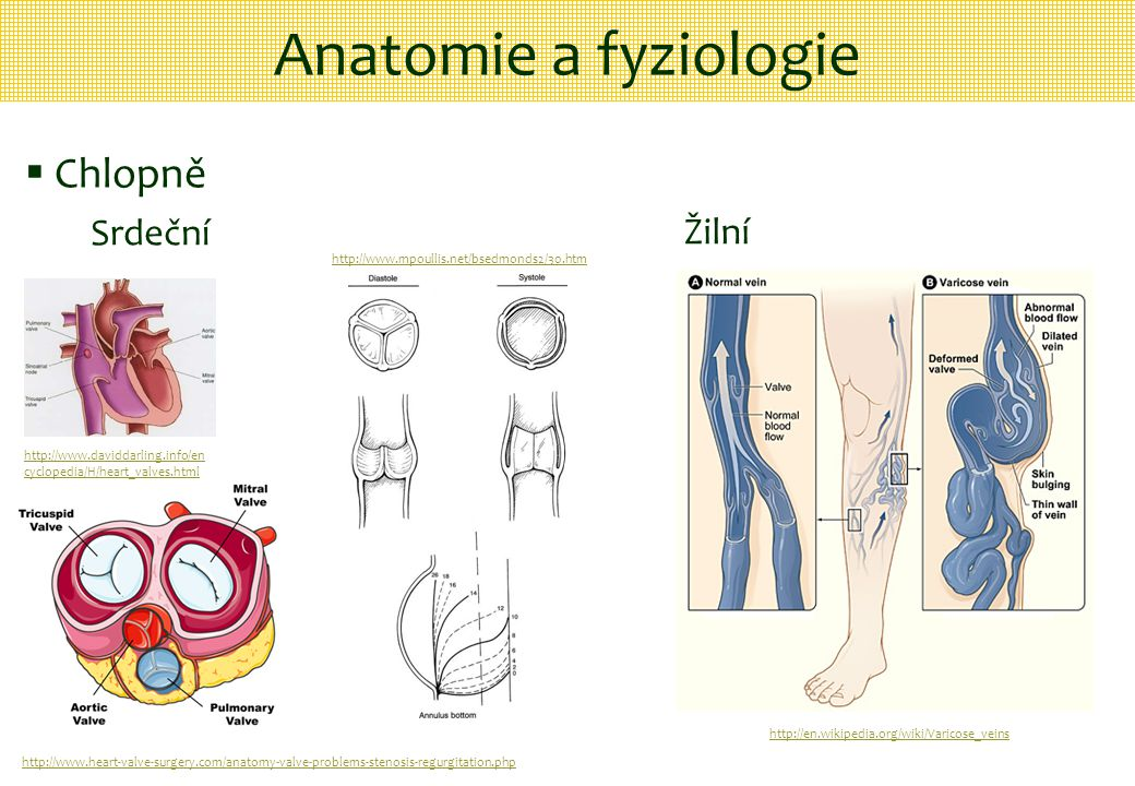 Anatomie a fyziologie Chlopně Srdeční Žilní