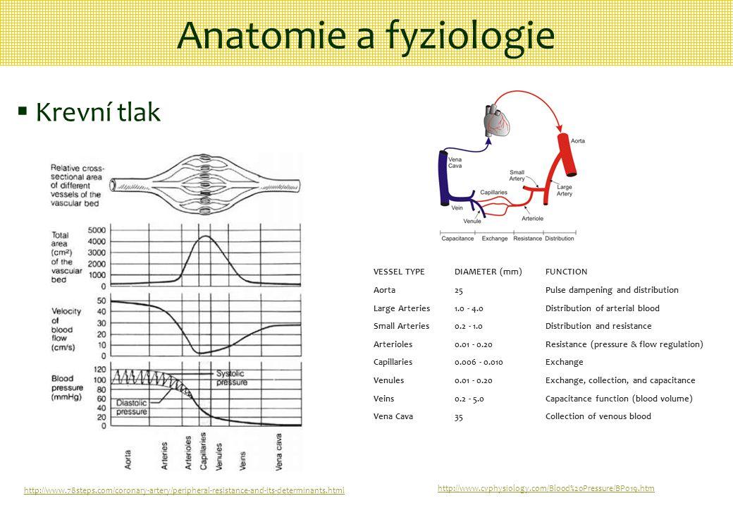 Anatomie a fyziologie Krevní tlak VESSEL TYPE DIAMETER (mm) FUNCTION