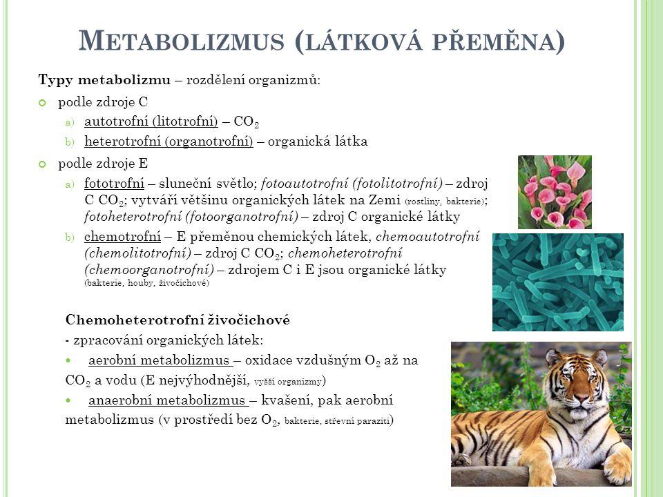 Metabolizmus (látková přeměna)