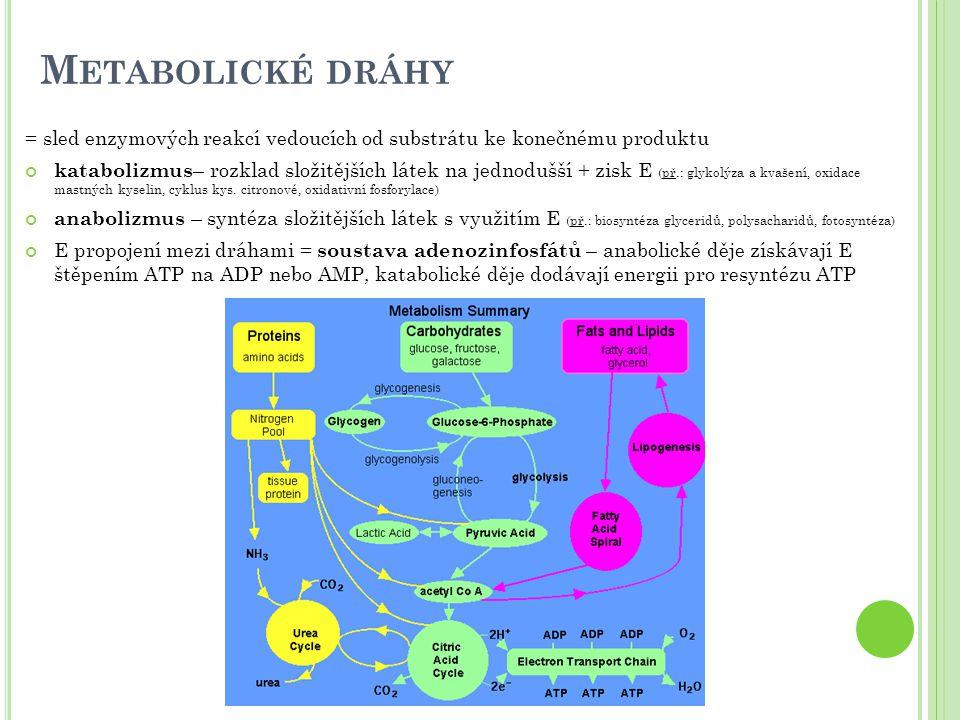 Metabolické dráhy = sled enzymových reakcí vedoucích od substrátu ke konečnému produktu.