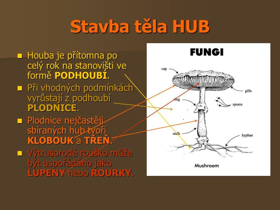 Stavba těla HUB Houba je přítomna po celý rok na stanovišti ve formě PODHOUBÍ. Při vhodných podmínkách vyrůstají z podhoubí PLODNICE.
