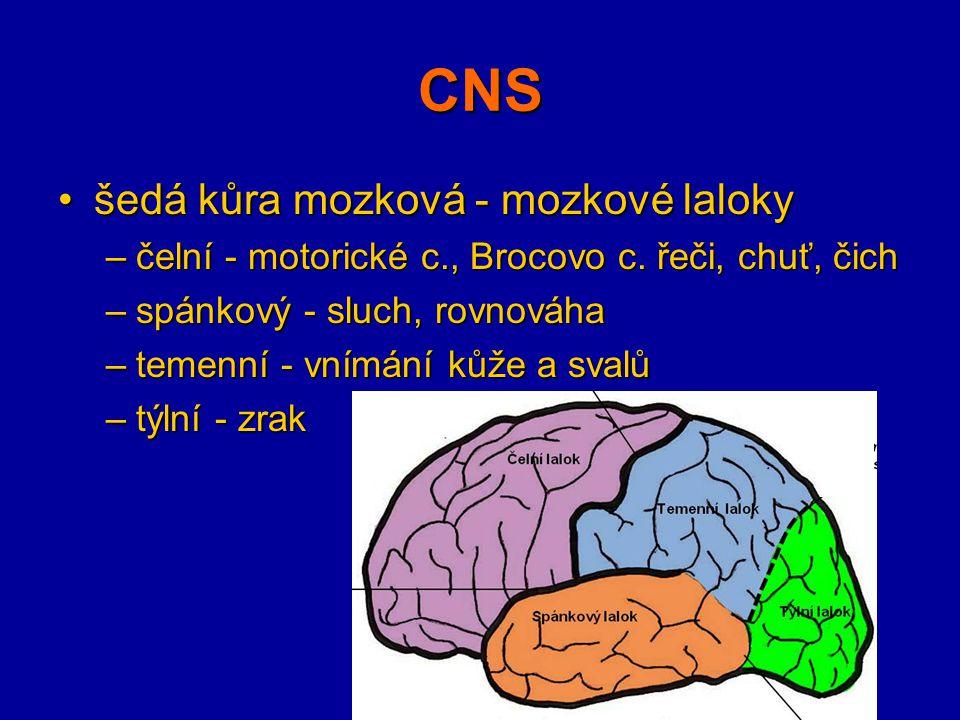 CNS šedá kůra mozková - mozkové laloky