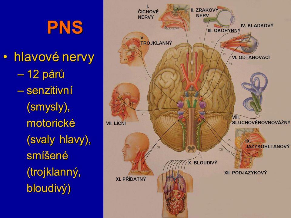 PNS hlavové nervy 12 párů senzitivní (smysly), motorické