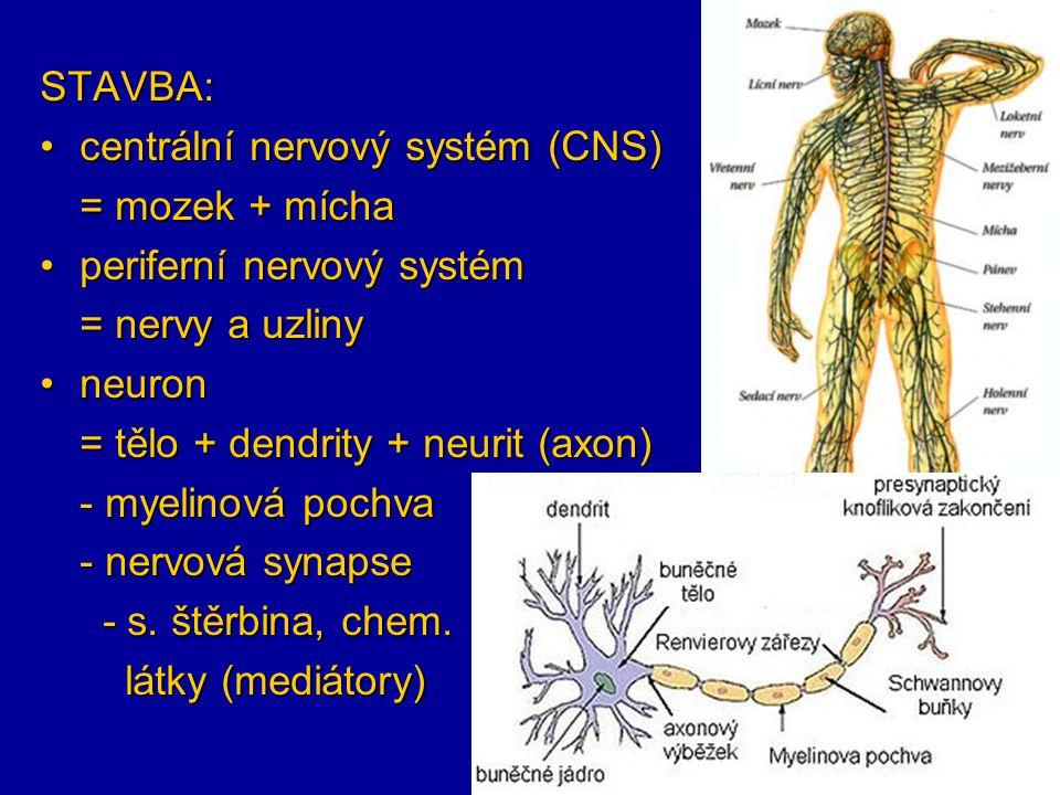 STAVBA: centrální nervový systém (CNS) = mozek + mícha. periferní nervový systém. = nervy a uzliny.