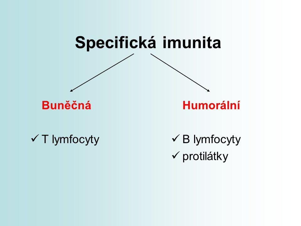 Specifická imunita Buněčná T lymfocyty Humorální B lymfocyty
