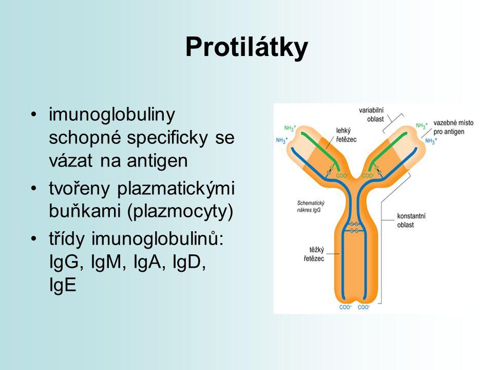 Protilátky imunoglobuliny schopné specificky se vázat na antigen
