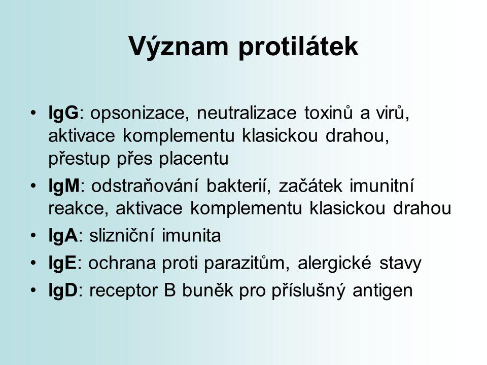 Význam protilátek IgG: opsonizace, neutralizace toxinů a virů, aktivace komplementu klasickou drahou, přestup přes placentu.