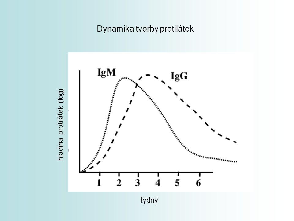 Dynamika tvorby protilátek