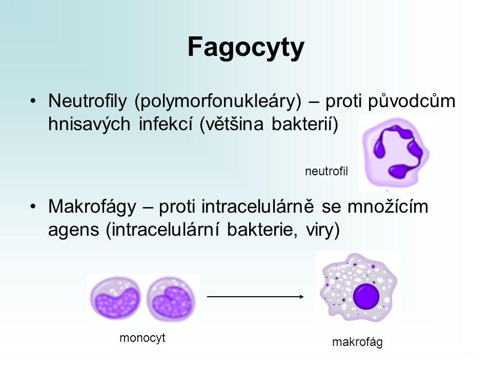 Fagocyty Neutrofily (polymorfonukleáry) – proti původcům hnisavých infekcí (většina bakterií)