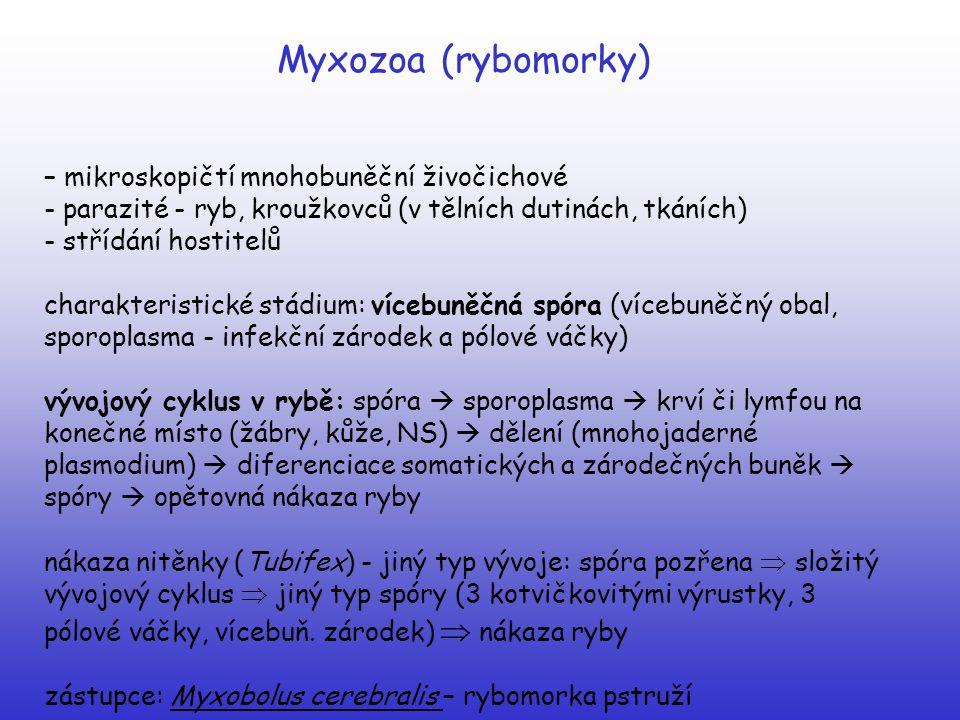 Myxozoa (rybomorky) – mikroskopičtí mnohobuněční živočichové