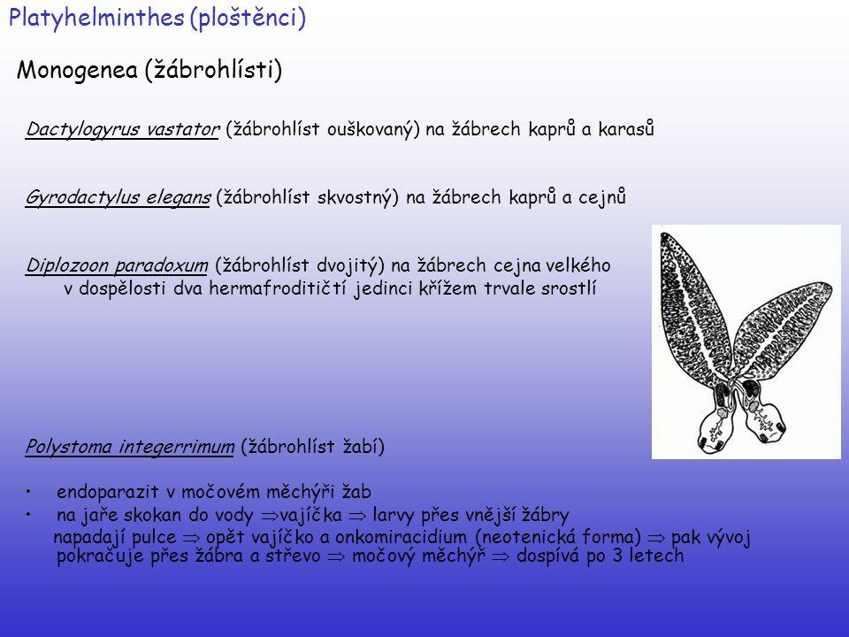 Platyhelminthes (ploštěnci) Monogenea (žábrohlísti)