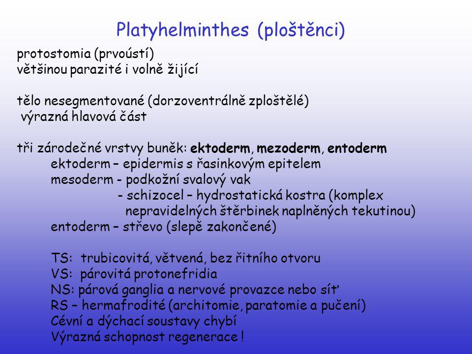 Platyhelminthes (ploštěnci)