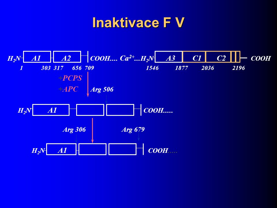 Inaktivace F V +PCPS +APC Arg 506