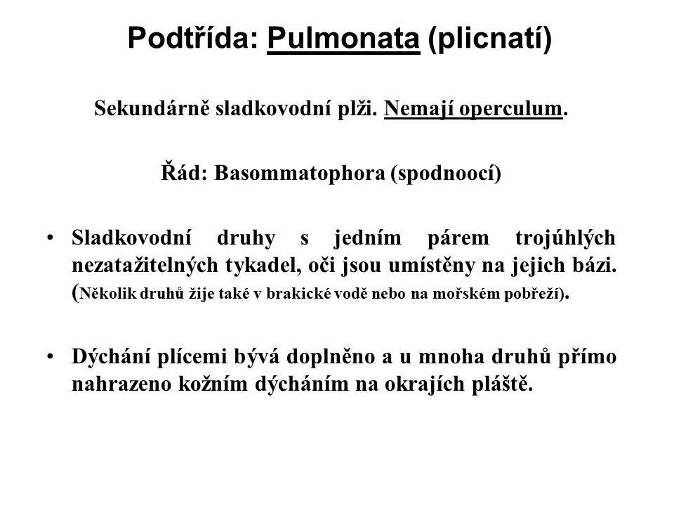 Podtřída: Pulmonata (plicnatí)