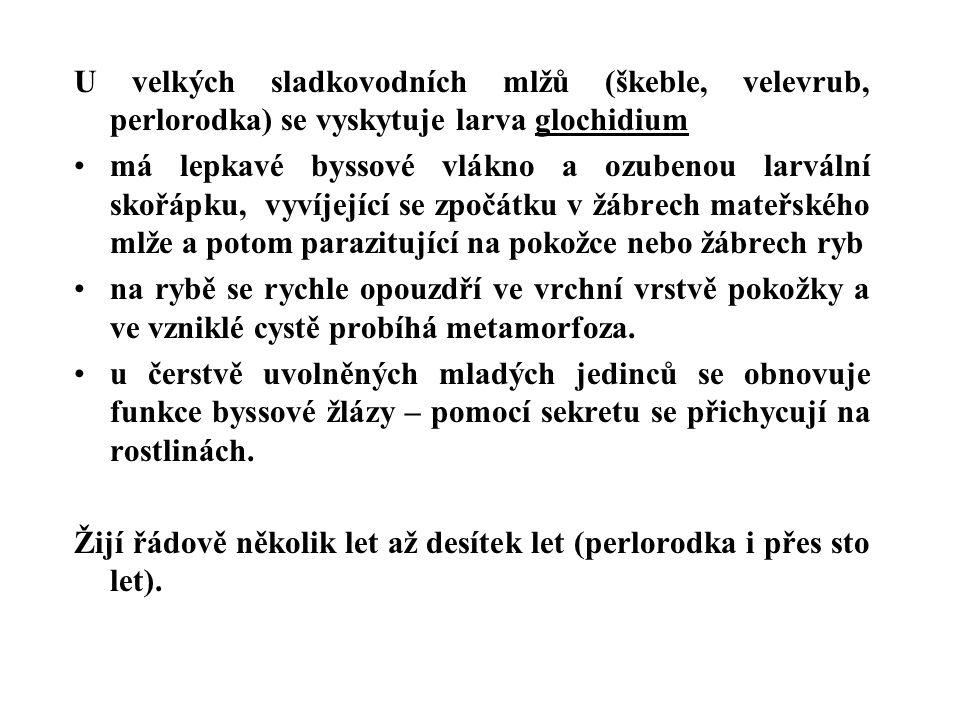 U velkých sladkovodních mlžů (škeble, velevrub, perlorodka) se vyskytuje larva glochidium