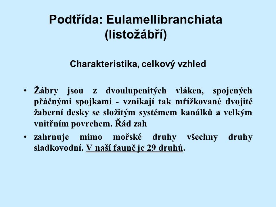 Podtřída: Eulamellibranchiata (listožábří)