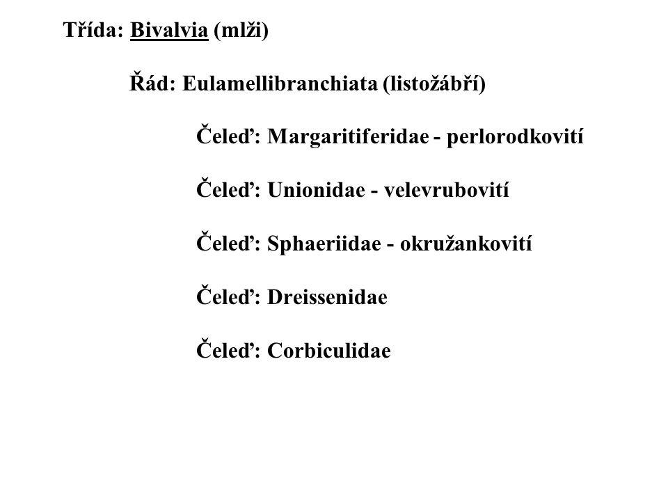 Třída: Bivalvia (mlži). Řád: Eulamellibranchiata (listožábří)