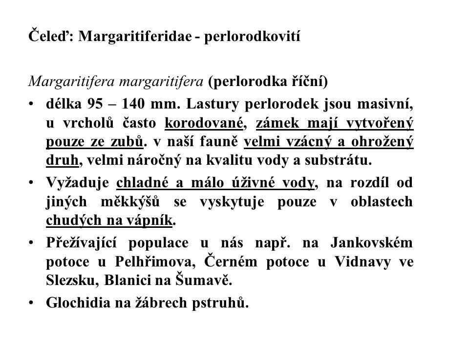 Čeleď: Margaritiferidae - perlorodkovití
