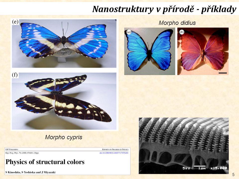Nanostruktury v přírodě - příklady