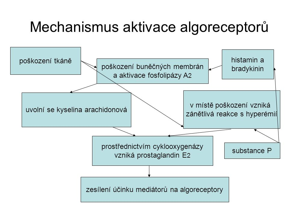 Mechanismus aktivace algoreceptorů