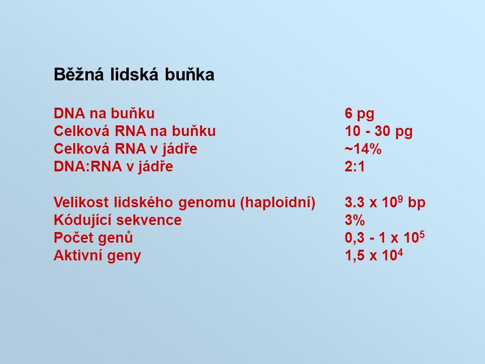 Běžná lidská buňka DNA na buňku 6 pg Celková RNA na buňku 10 - 30 pg