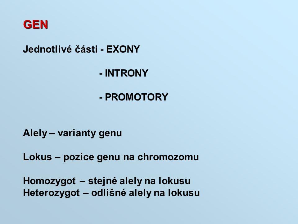 GEN Jednotlivé části - EXONY - INTRONY - PROMOTORY