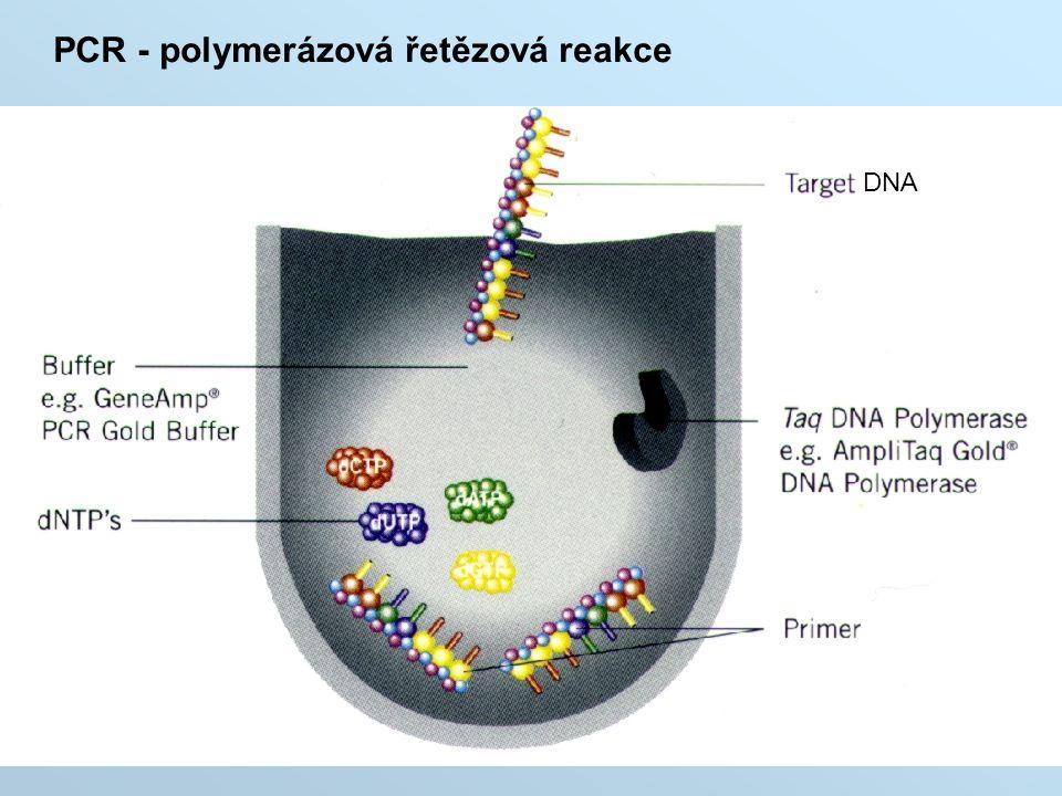 PCR - polymerázová řetězová reakce