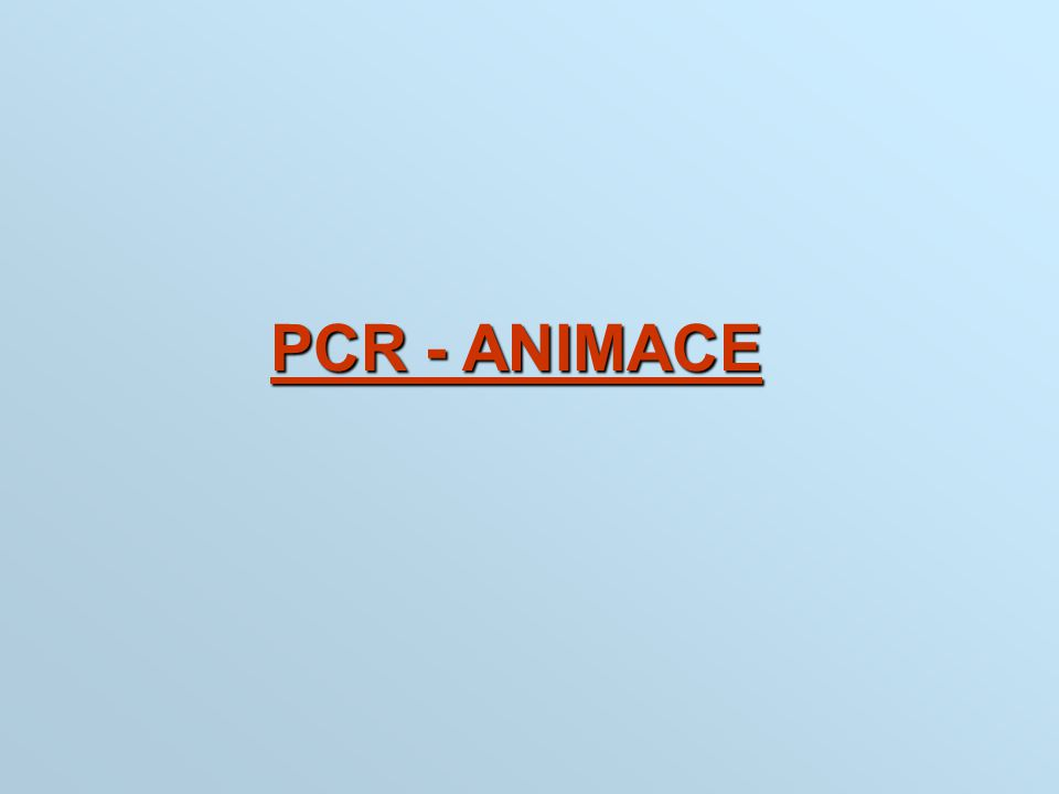 PCR - ANIMACE