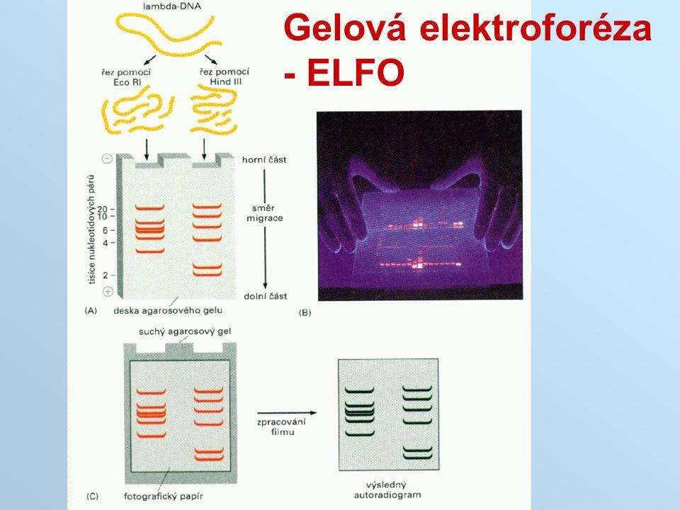 Gelová elektroforéza - ELFO