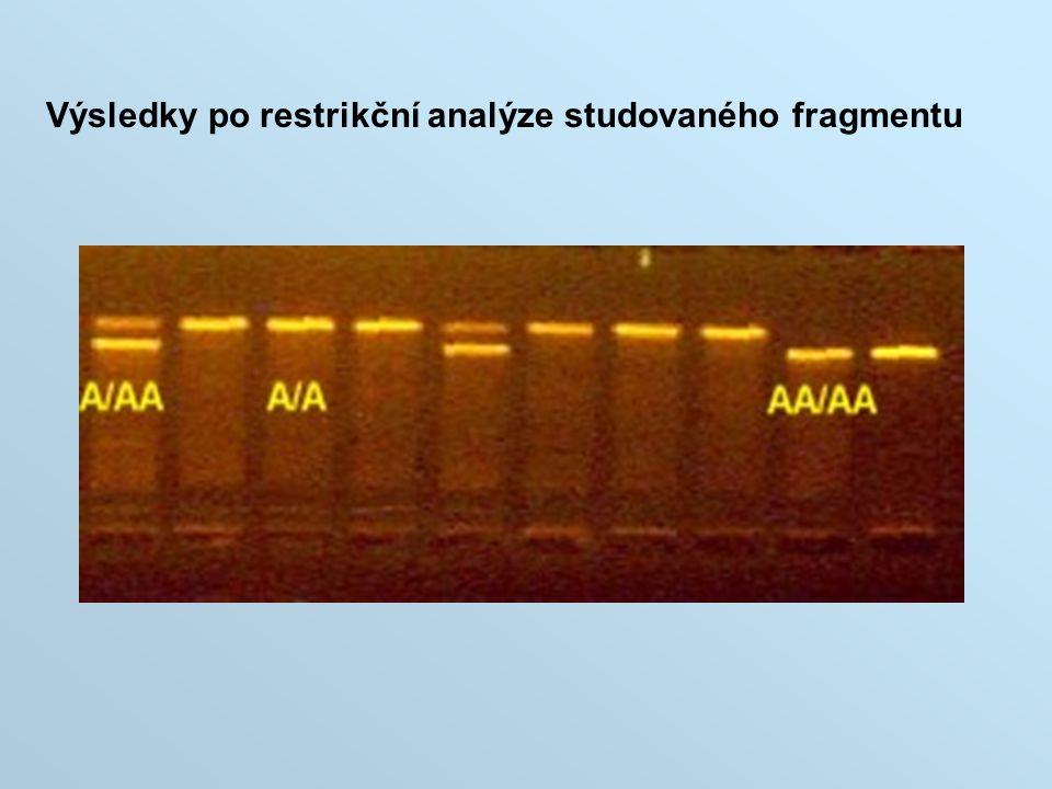 Výsledky po restrikční analýze studovaného fragmentu