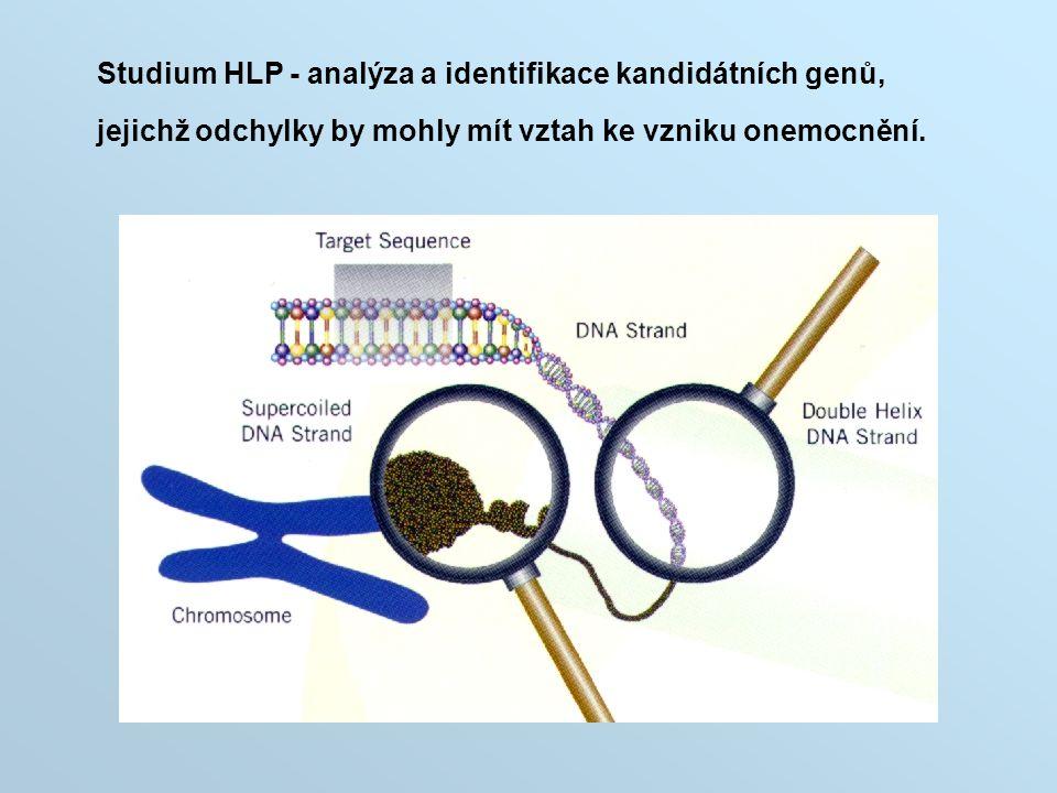 Studium HLP - analýza a identifikace kandidátních genů,