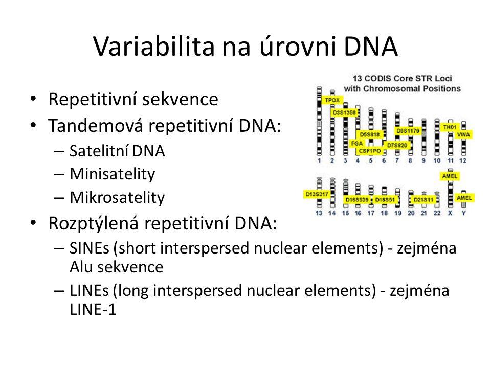 Variabilita na úrovni DNA