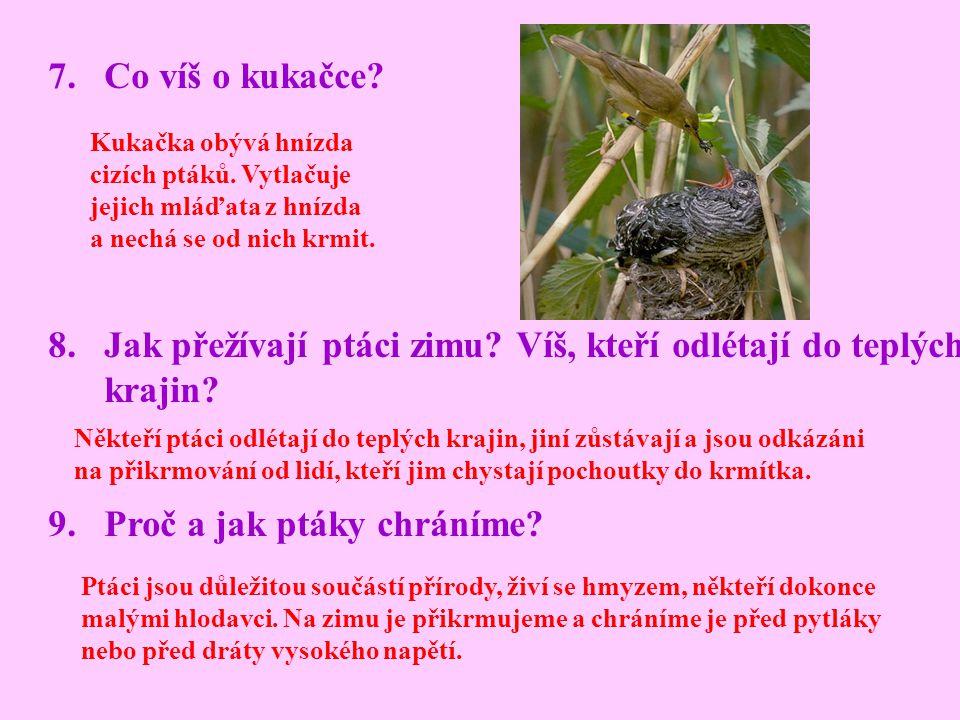8. Jak přežívají ptáci zimu Víš, kteří odlétají do teplých krajin
