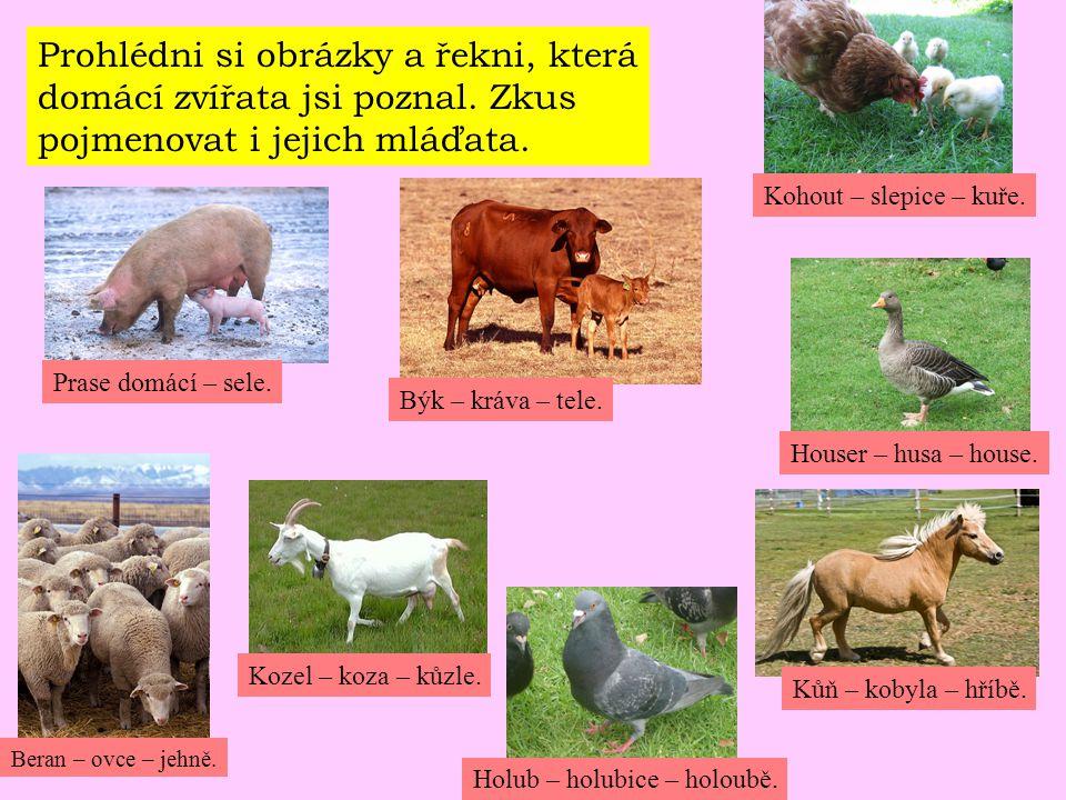 Prohlédni si obrázky a řekni, která domácí zvířata jsi poznal. Zkus