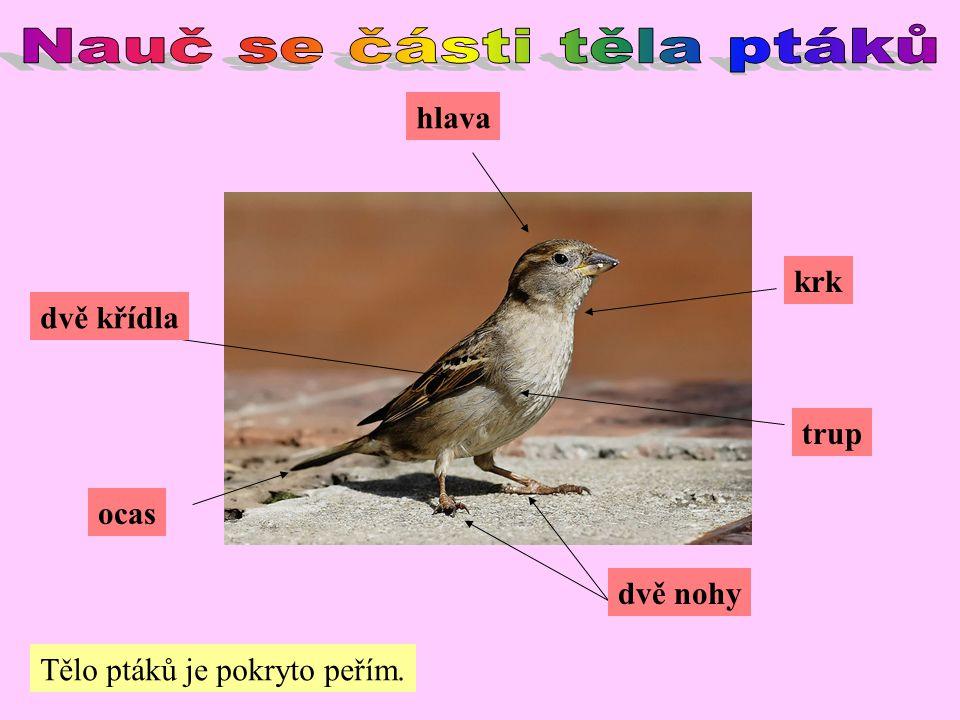 Nauč se části těla ptáků